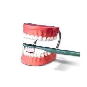 Giant Tooth Brushing Model Dental Hygiene