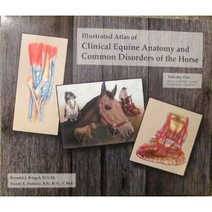 Illustrated Atlas of Clinical Equine Anatomy and Common