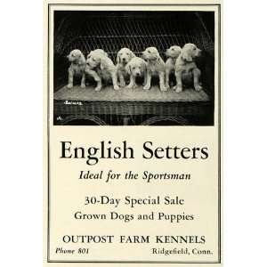 Ad Outpost Farm Kennels English Setter Puppies Sportsman Hunting Dog
