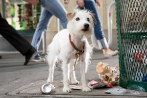 Hotel for Dogs (Widescreen Edition): Emma Roberts, Jake T
