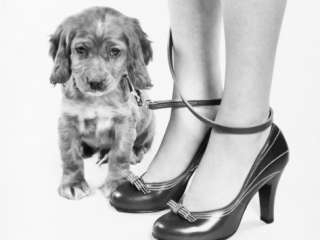 Puppy Photographic Print by H. Armstrong Roberts at AllPosters