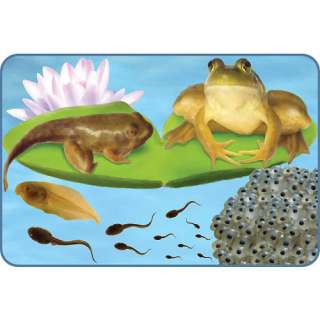 Insect Lore Giant Life Cycle Puzzle   Frog   Insect Lore 1001615