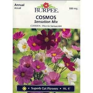 Burpee Sensation Mix Cosmos   100 Seeds Patio, Lawn & Garden