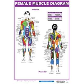 Fitness Publishing Female Muscle Diagram Poster Exercise & Fitness