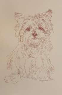 #141 Kline de arte perro de Yorkshire Terrier firmó el DIBUJO de